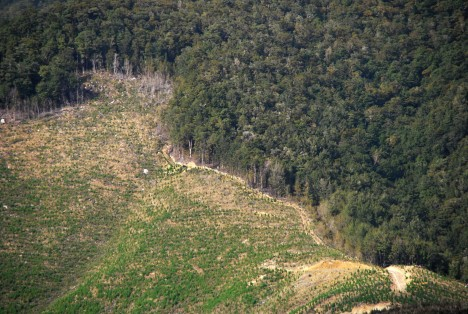 reforestation by drone