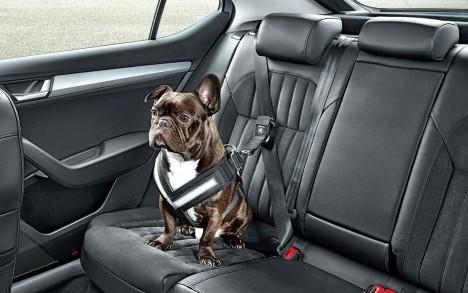 pet seat belt skoda