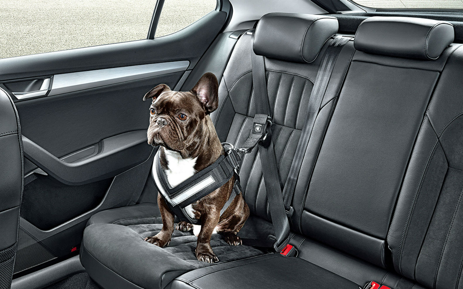 Dog Car Harness >> Canine Car Harness: Doggie Seat Belt Keeps Everyone Safe | Gadgets, Science & Technology