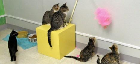 i pet cat toys