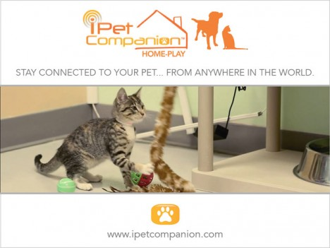 ipet companion website