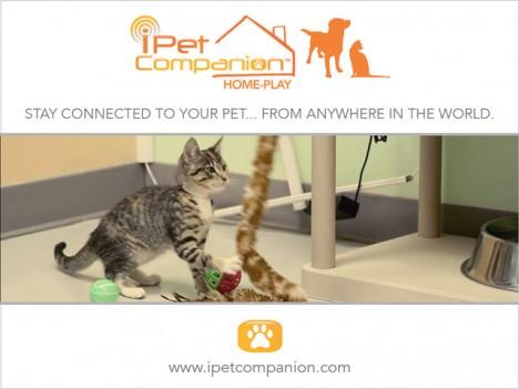 ipet companion website