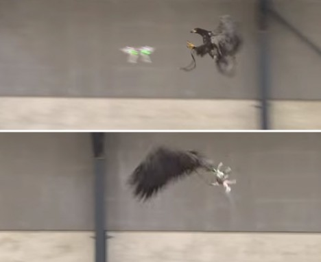 drone stopping eagles