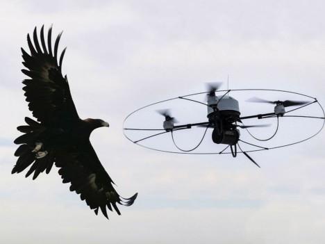 eagle takedown drones