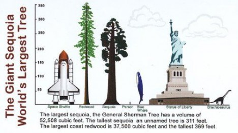 tallest tree comparison structures
