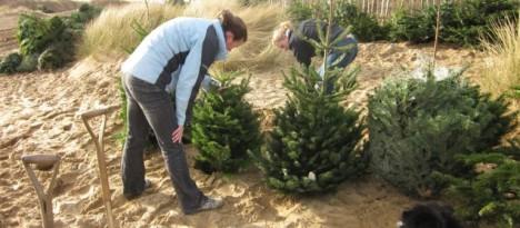 tree beach planting
