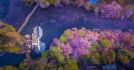cherry lake above
