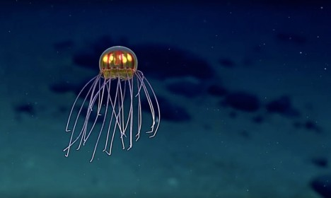 jellyfish deep