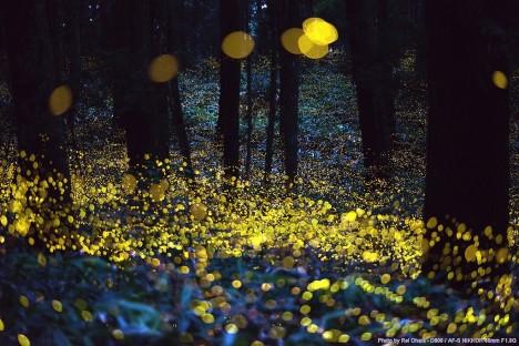 firefly light show